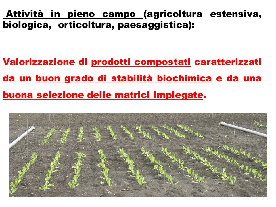 Attività in pieno campo (agricoltura estensiva, biologica, orticoltura, paesaggistica):