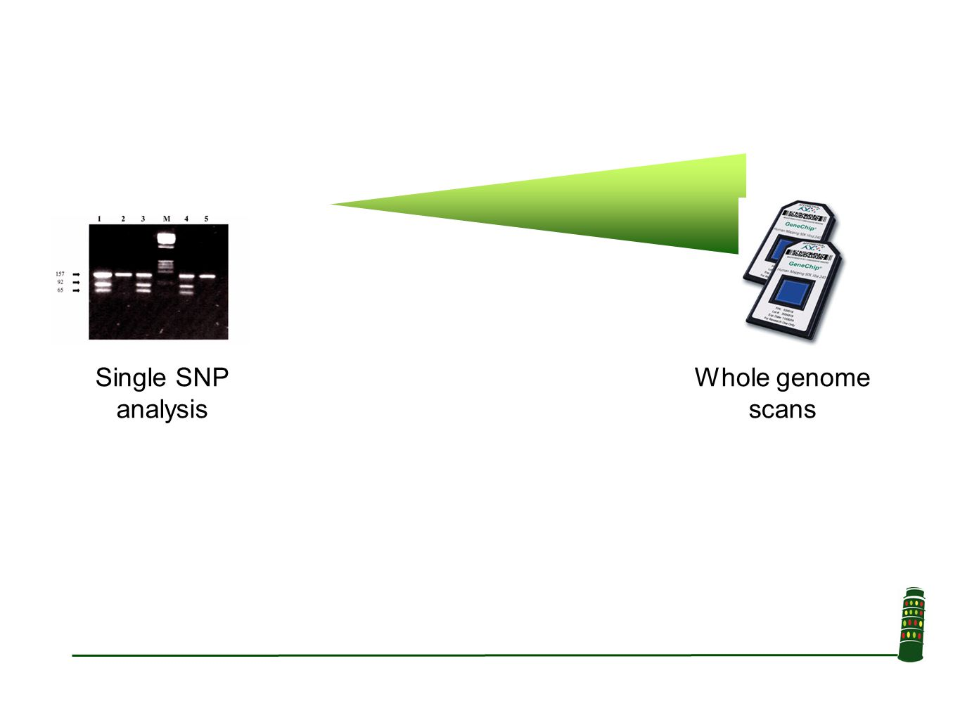 Single SNP analysis Whole genome scans
