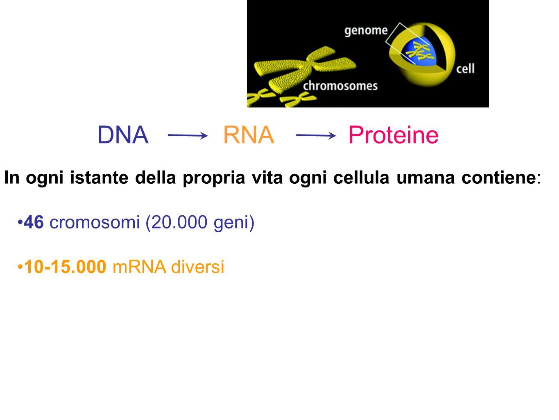 DNA RNA Proteine In ogni istante della propria vita ogni cellula umana contiene: