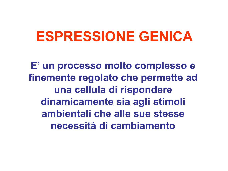 ESPRESSIONE GENICA