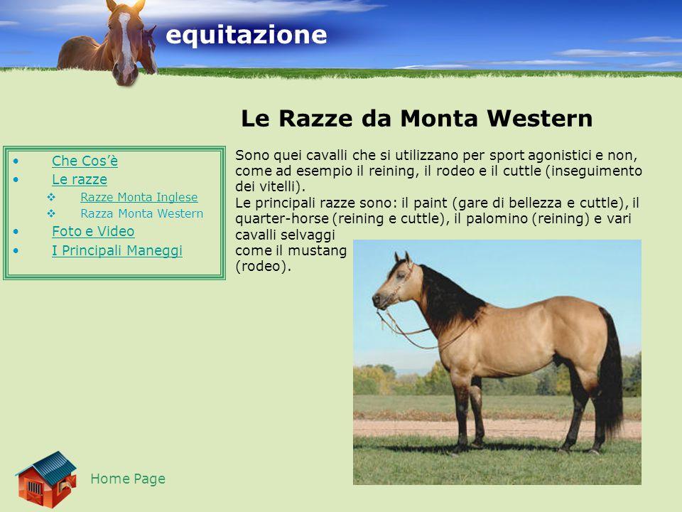 equitazione Le Razze da Monta Western