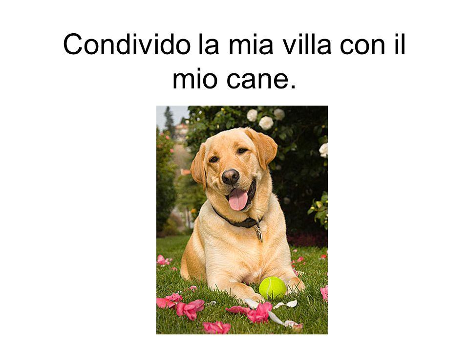 Condivido la mia villa con il mio cane.