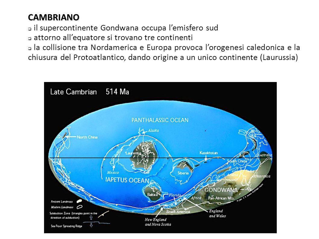 CAMBRIANO il supercontinente Gondwana occupa l'emisfero sud