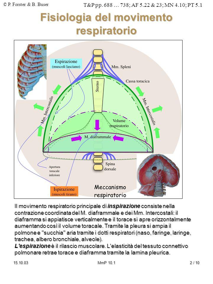 Fisiologia del movimento respiratorio