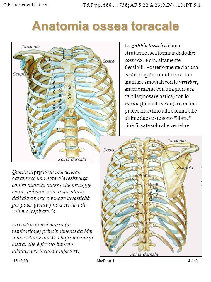 Anatomia ossea toracale