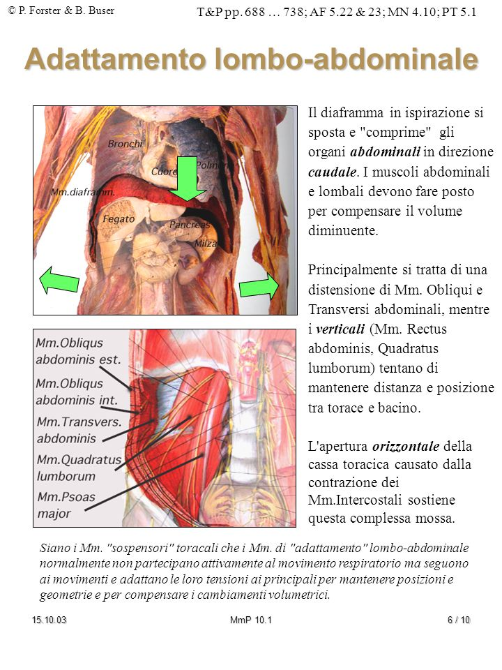 Adattamento lombo-abdominale