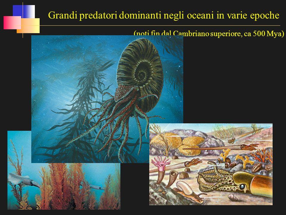 Grandi predatori dominanti negli oceani in varie epoche