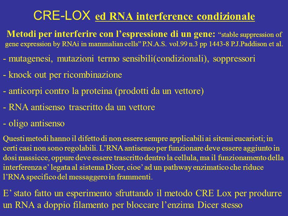 CRE-LOX ed RNA interference condizionale
