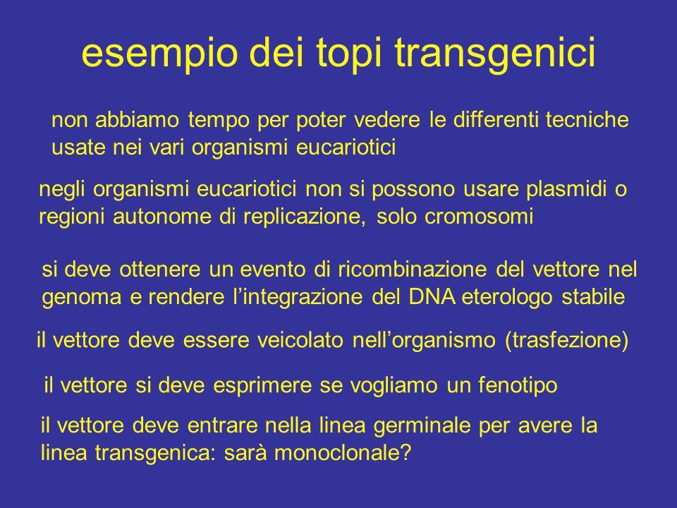 esempio dei topi transgenici