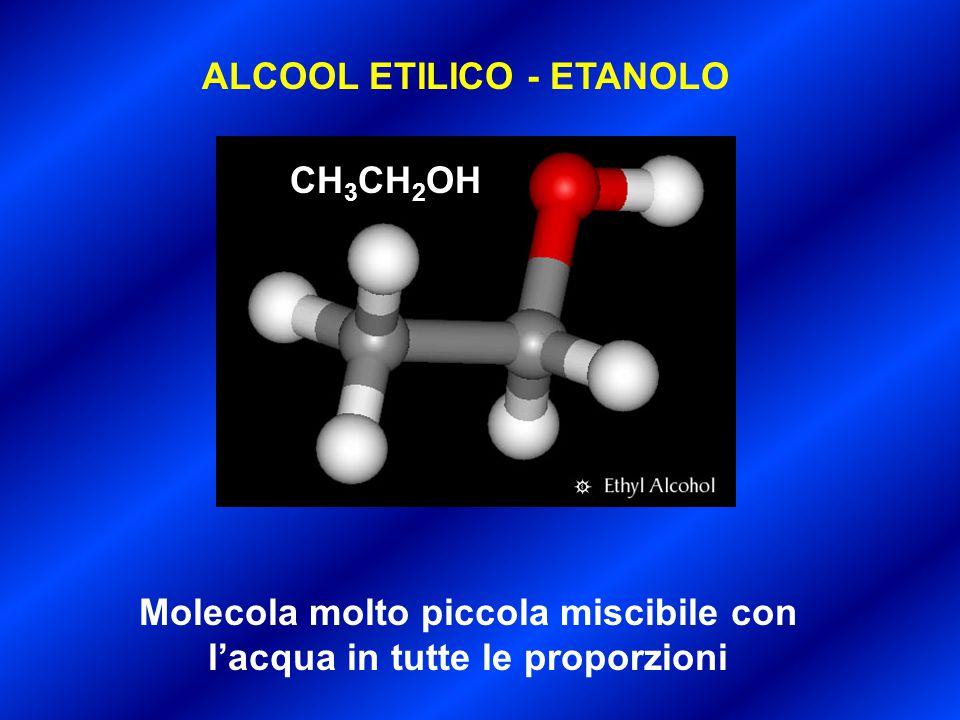Molecola molto piccola miscibile con l'acqua in tutte le proporzioni