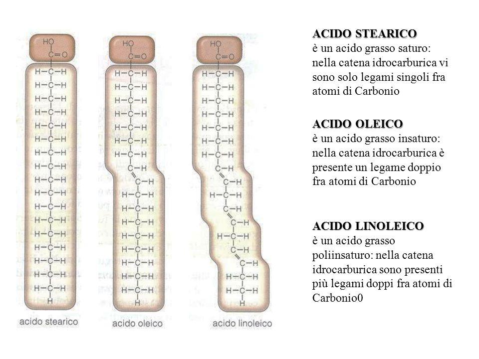 ACIDO STEARICO è un acido grasso saturo: nella catena idrocarburica vi sono solo legami singoli fra atomi di Carbonio.