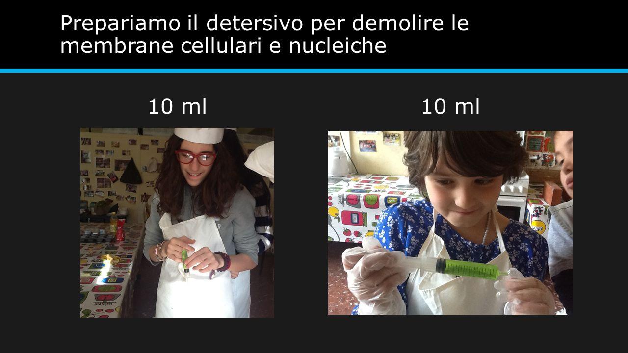 Prepariamo il detersivo per demolire le membrane cellulari e nucleiche
