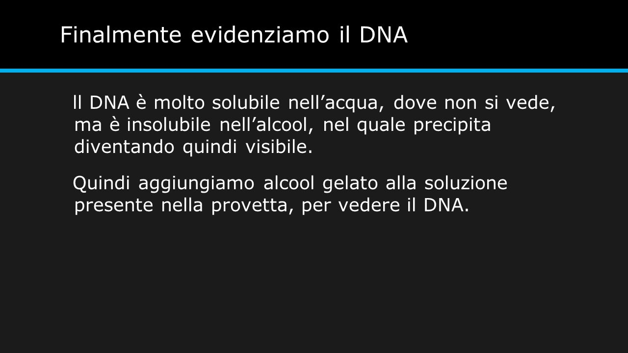 Finalmente evidenziamo il DNA