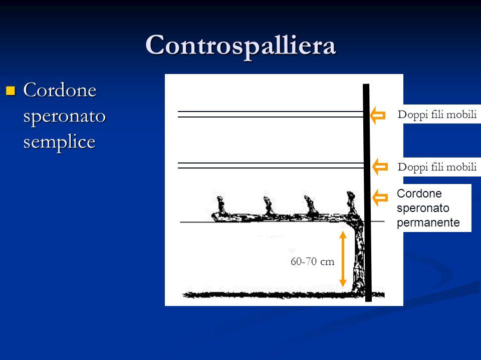 Controspalliera Cordone speronato semplice Doppi fili mobili
