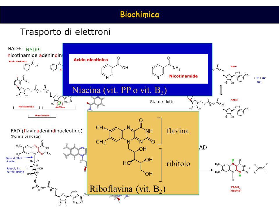 Niacina (vit. PP o vit. B3) Riboflavina (vit. B2) flavina ribitolo