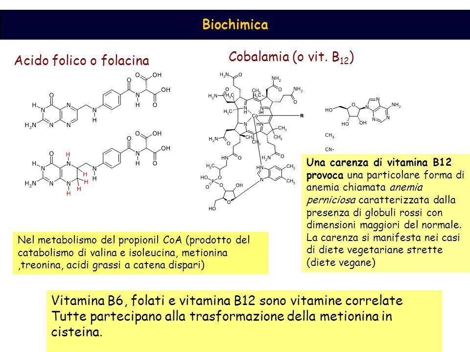 Acido folico o folacina