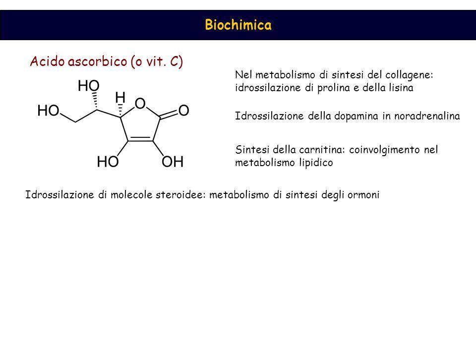 Acido ascorbico (o vit. C)