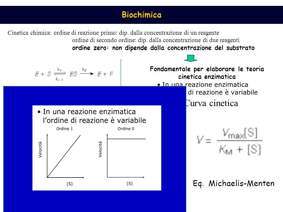Fondamentale per elaborare le teoria cinetica enzimatica