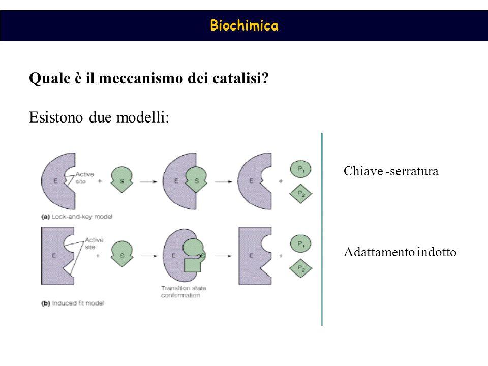Quale è il meccanismo dei catalisi Esistono due modelli: