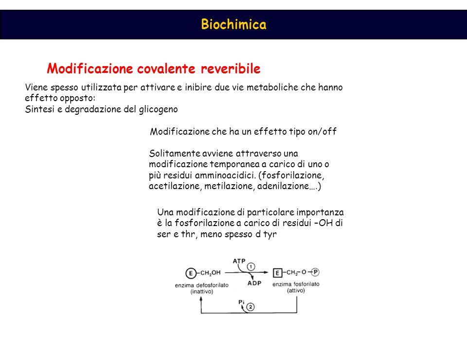 Modificazione covalente reveribile