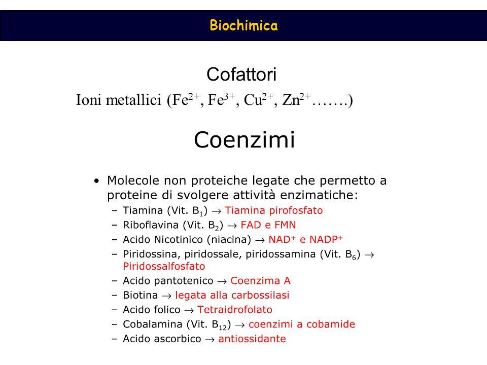 Cofattori Ioni metallici (Fe2+, Fe3+, Cu2+, Zn2+…….)