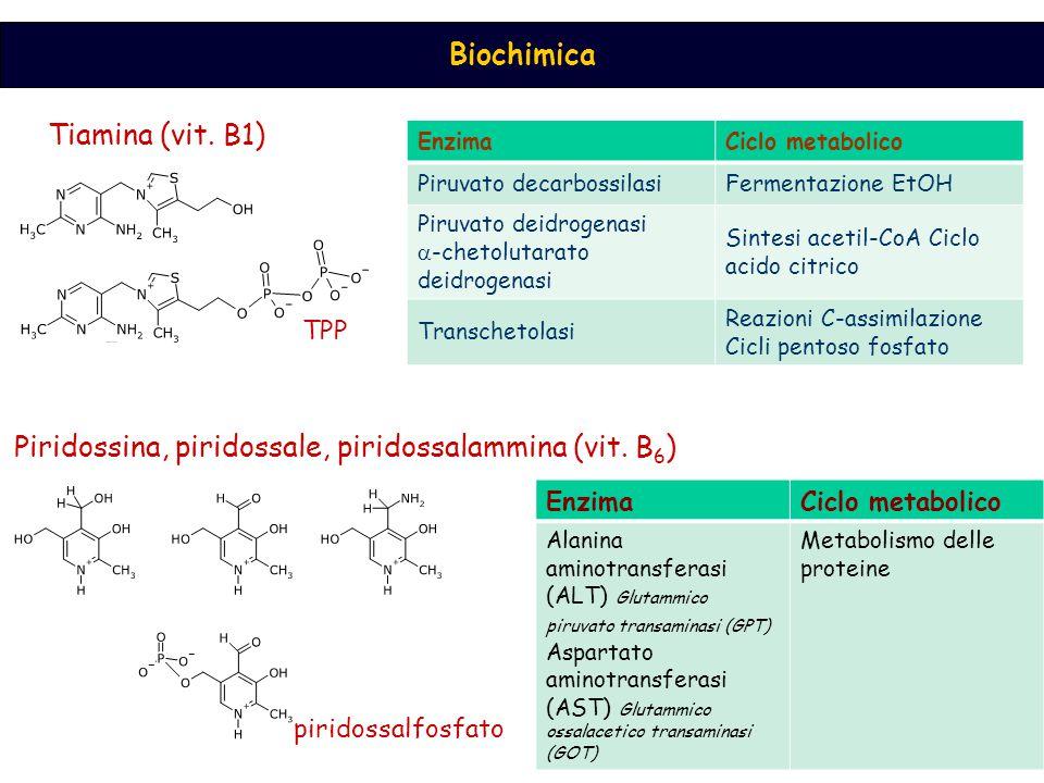 Piridossina, piridossale, piridossalammina (vit. B6)