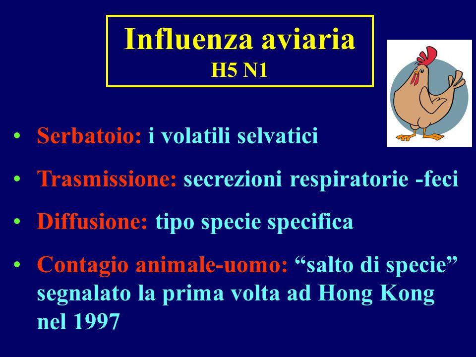 Influenza aviaria H5 N1 Serbatoio: i volatili selvatici