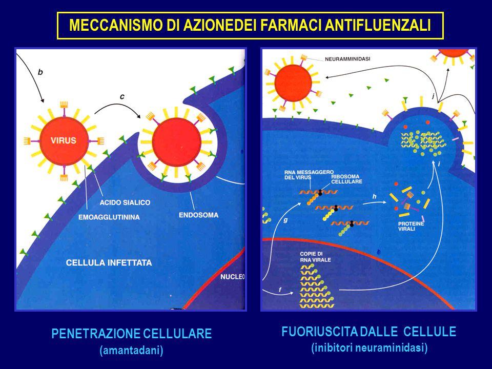 MECCANISMO DI AZIONEDEI FARMACI ANTIFLUENZALI
