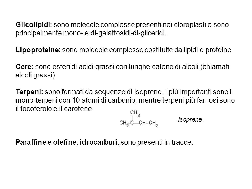 Lipoproteine: sono molecole complesse costituite da lipidi e proteine