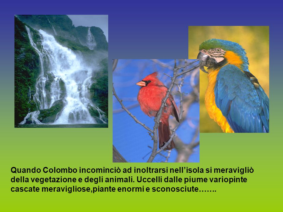 Quando Colombo incominciò ad inoltrarsi nell'isola si meravigliò della vegetazione e degli animali.