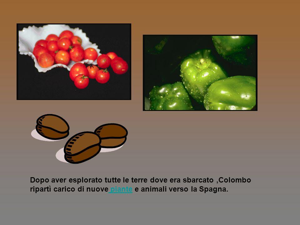 Dopo aver esplorato tutte le terre dove era sbarcato ,Colombo ripartì carico di nuove piante e animali verso la Spagna.