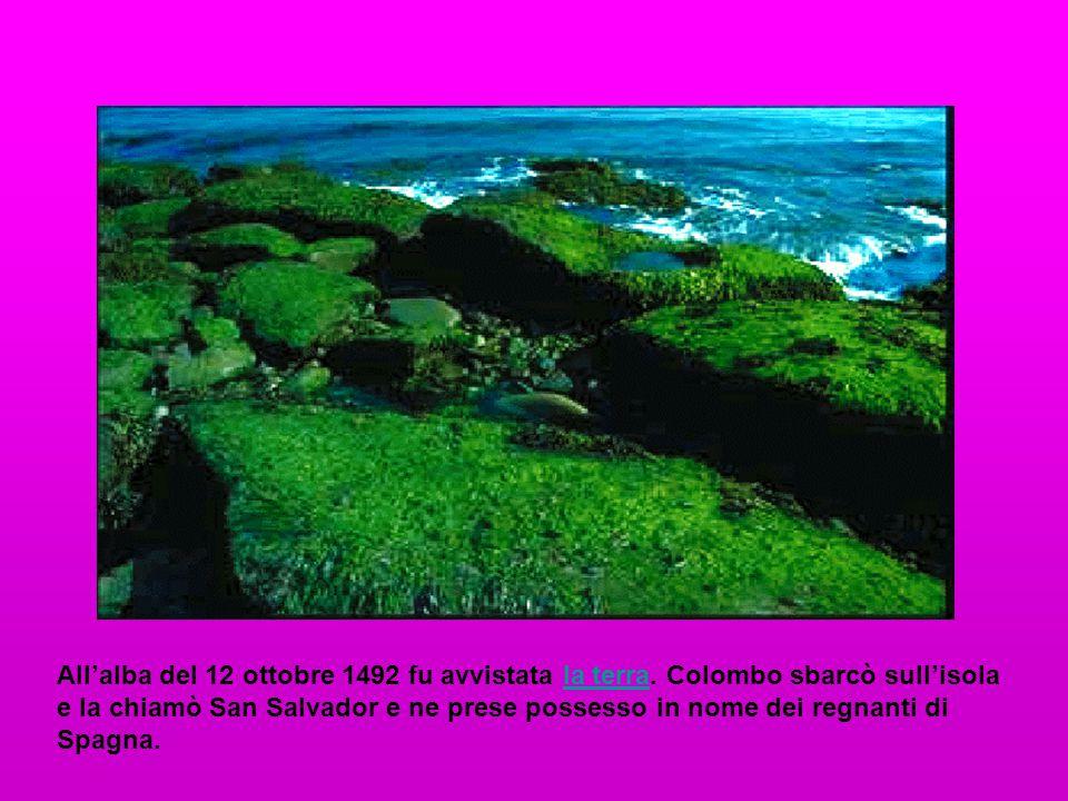 All'alba del 12 ottobre 1492 fu avvistata la terra