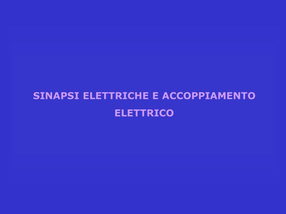 SINAPSI ELETTRICHE E ACCOPPIAMENTO ELETTRICO
