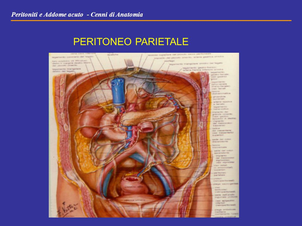 Peritoniti e Addome acuto - Cenni di Anatomia