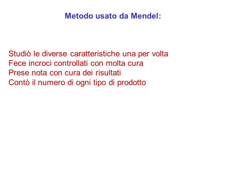 Metodo usato da Mendel: