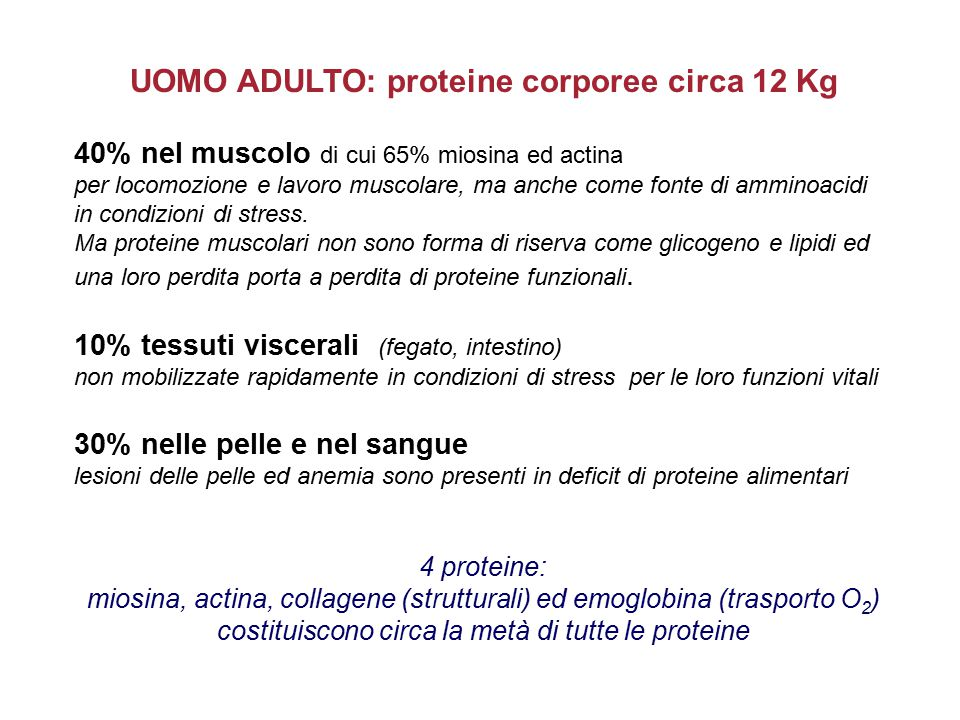 UOMO ADULTO: proteine corporee circa 12 Kg