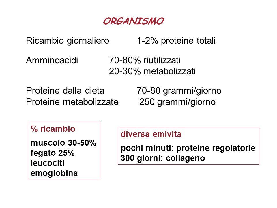 Ricambio giornaliero 1-2% proteine totali