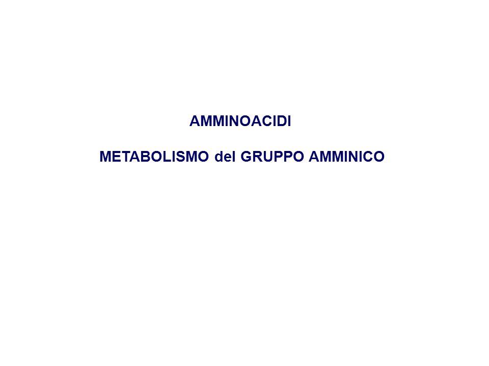 METABOLISMO del GRUPPO AMMINICO