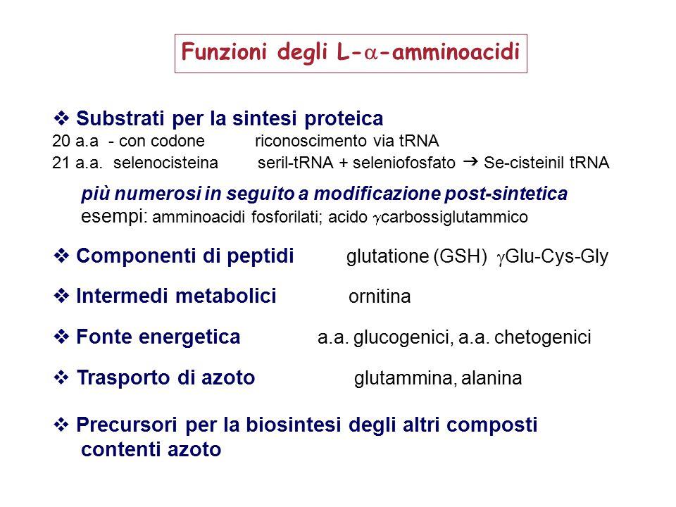 Funzioni degli L--amminoacidi