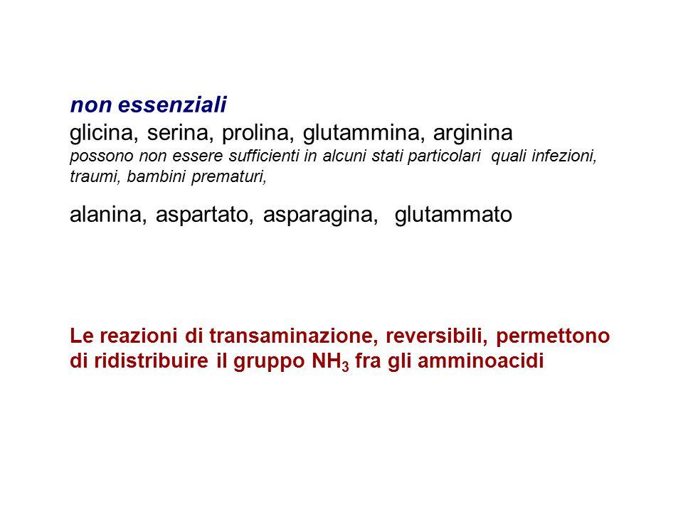 glicina, serina, prolina, glutammina, arginina