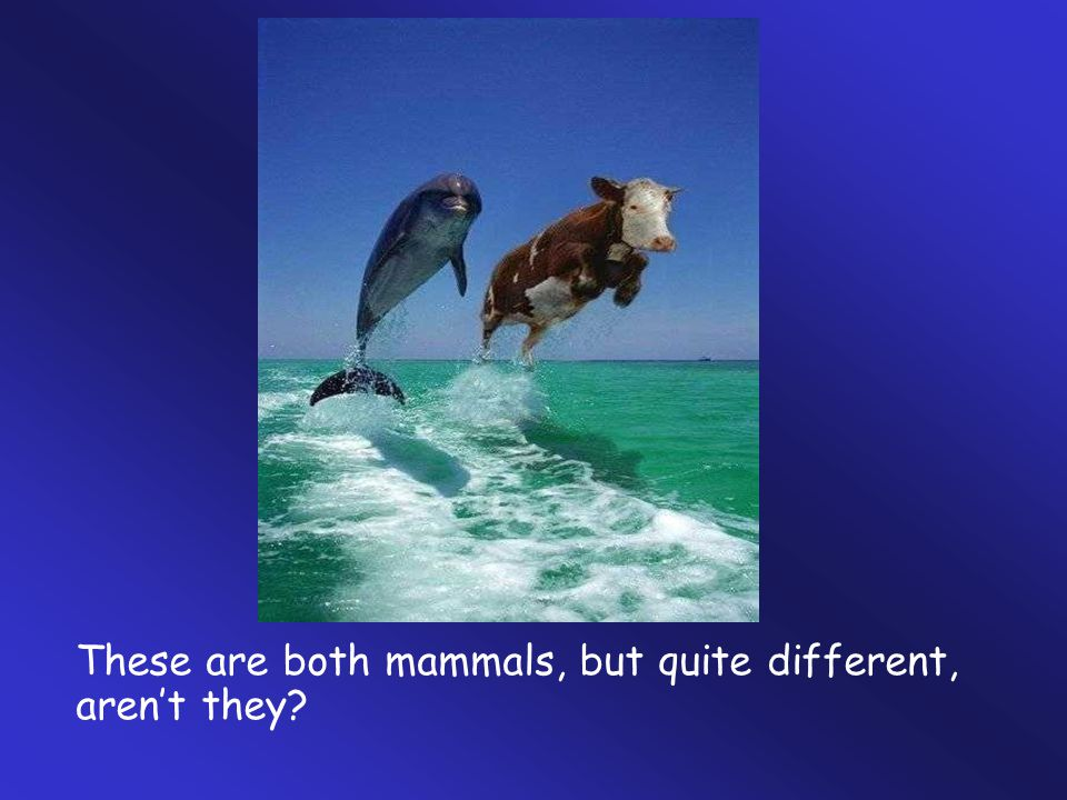 These are both mammals, but quite different, aren't they