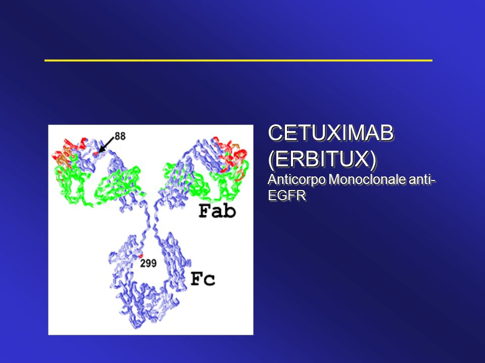CETUXIMAB (ERBITUX) Anticorpo Monoclonale anti-EGFR