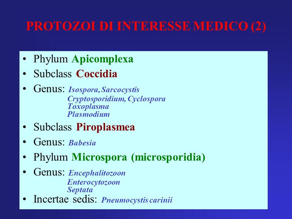 PROTOZOI DI INTERESSE MEDICO (2)