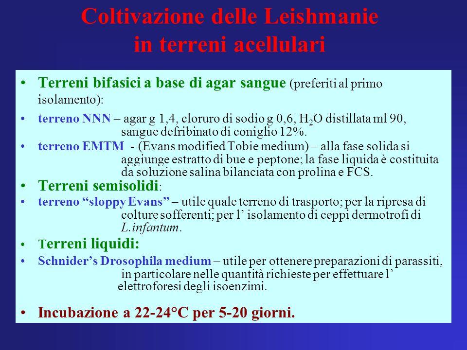 Coltivazione delle Leishmanie in terreni acellulari