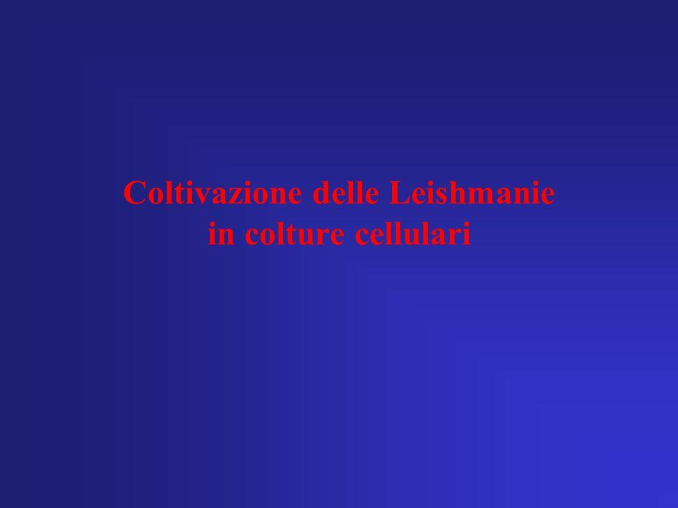 Coltivazione delle Leishmanie in colture cellulari