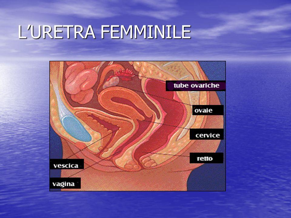 L'URETRA FEMMINILE