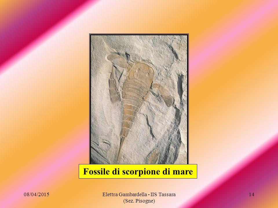Fossile di scorpione di mare