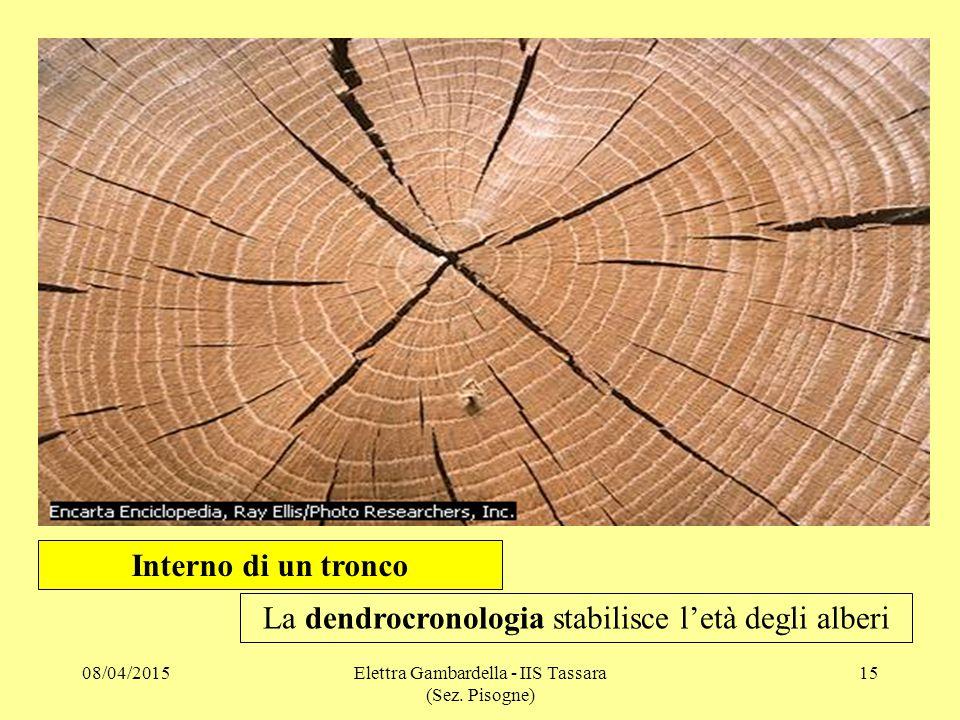La dendrocronologia stabilisce l'età degli alberi