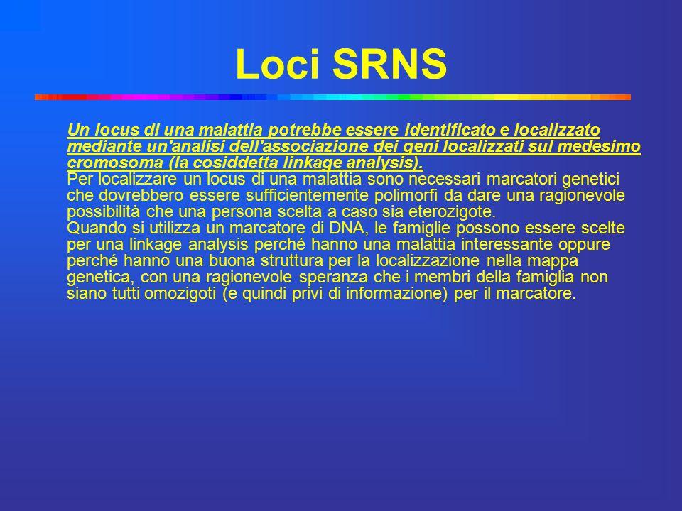 Loci SRNS