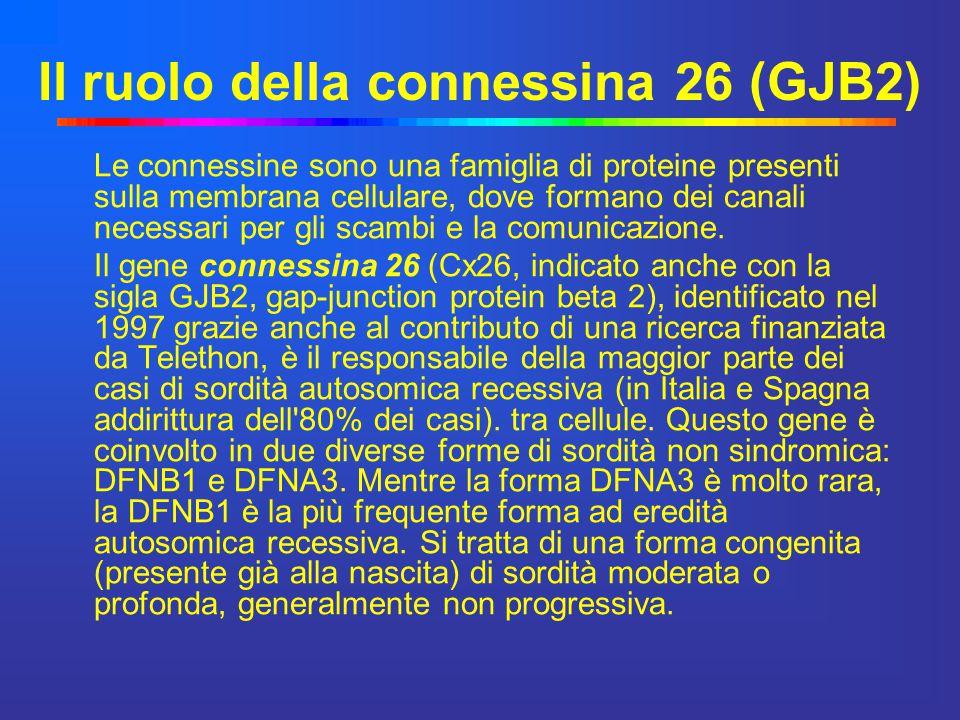 Il ruolo della connessina 26 (GJB2)